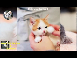 Ultimate Cute Kittens Beautiful Cats And Naughty Plus Smart Puppies