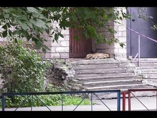 """""""Собачий вопрос"""". Администрация Саяногорска заплатит за нападение бездомной собаки - Абакан 24"""