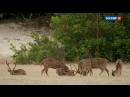 Дикая Шри Ланка 1 серия Озерный край 2015