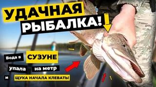 Удачная рыбалка! Вода в Сузуне упала и щука начала клевать!