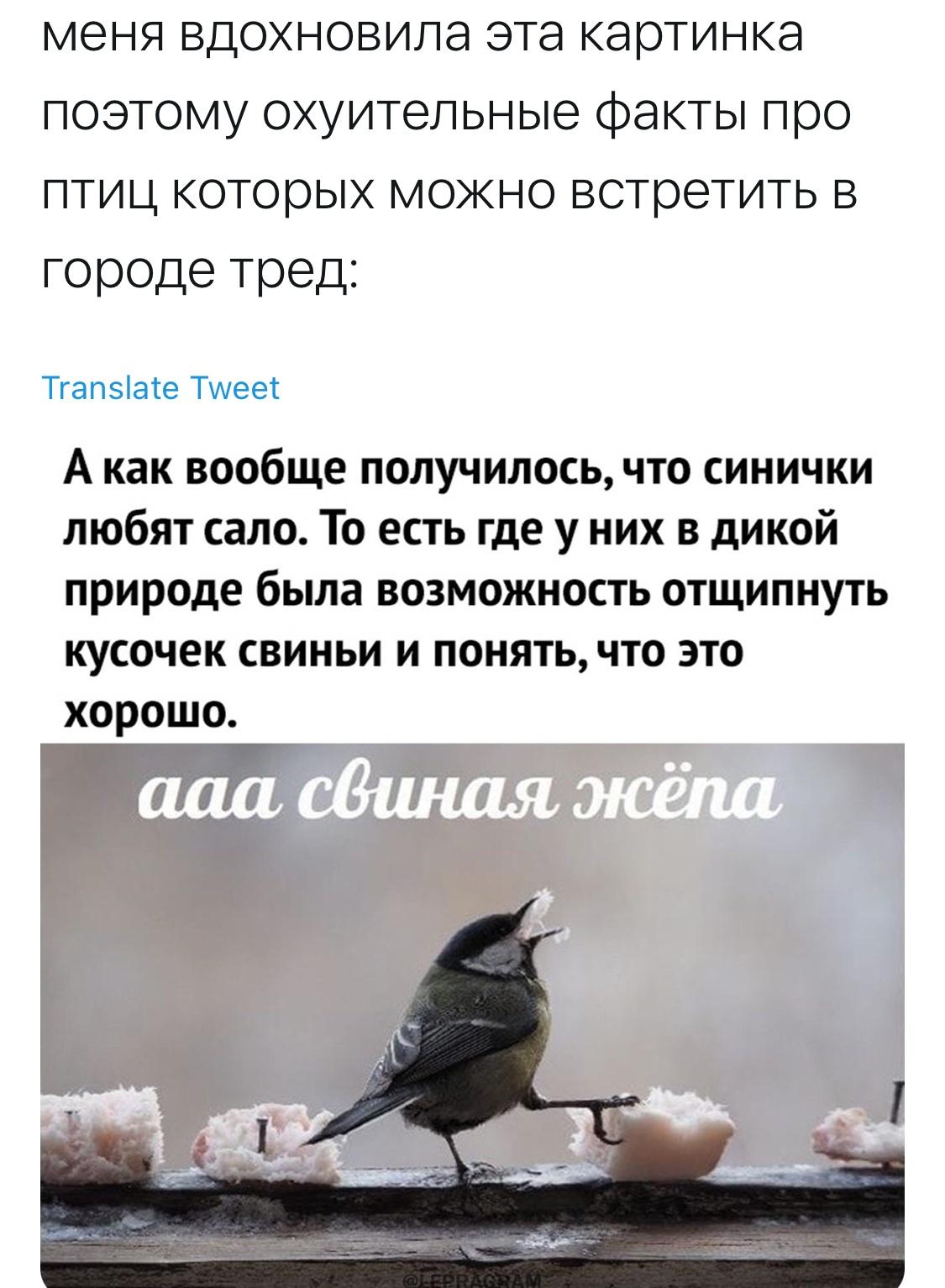 Факты о птицах
