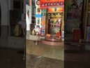 Шрипад БВ Шридхар Махарадж - даршан утром 02.06.2020 (Орисса, Берхампур)