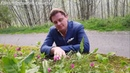Весенние цветы юга Италии Boule de Neige додекатионы и нарцисс