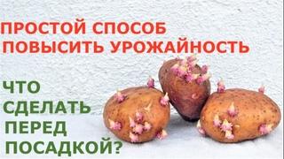 Китайский метод посадки картофеля повысит урожай или нет? Зачем и как резать картошку перед посадкой