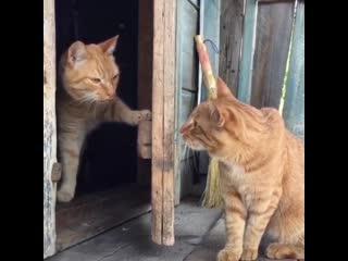Я не выйду гулять!😼