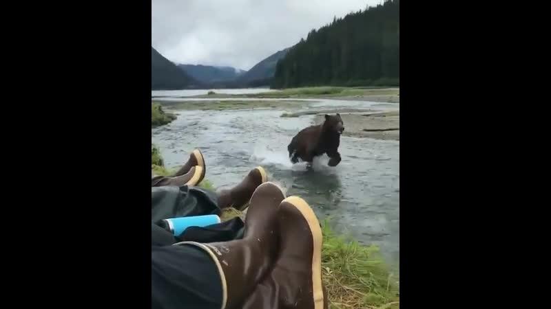 Бурый медведь Адмиралтейский остров Аляска